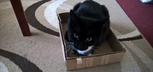 Luna sitting in a box