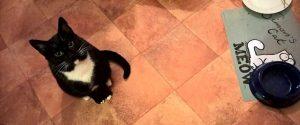 Sol awaiting food
