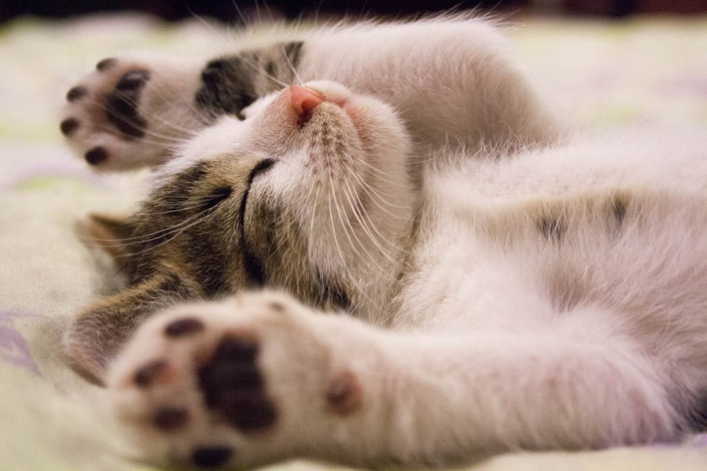 Stretched out kitten
